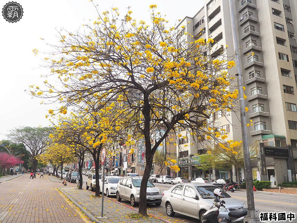 20180307230502 91 - 一次能捕捉到盛開的櫻花與黃花風鈴木耶~市區內賞花小確幸~