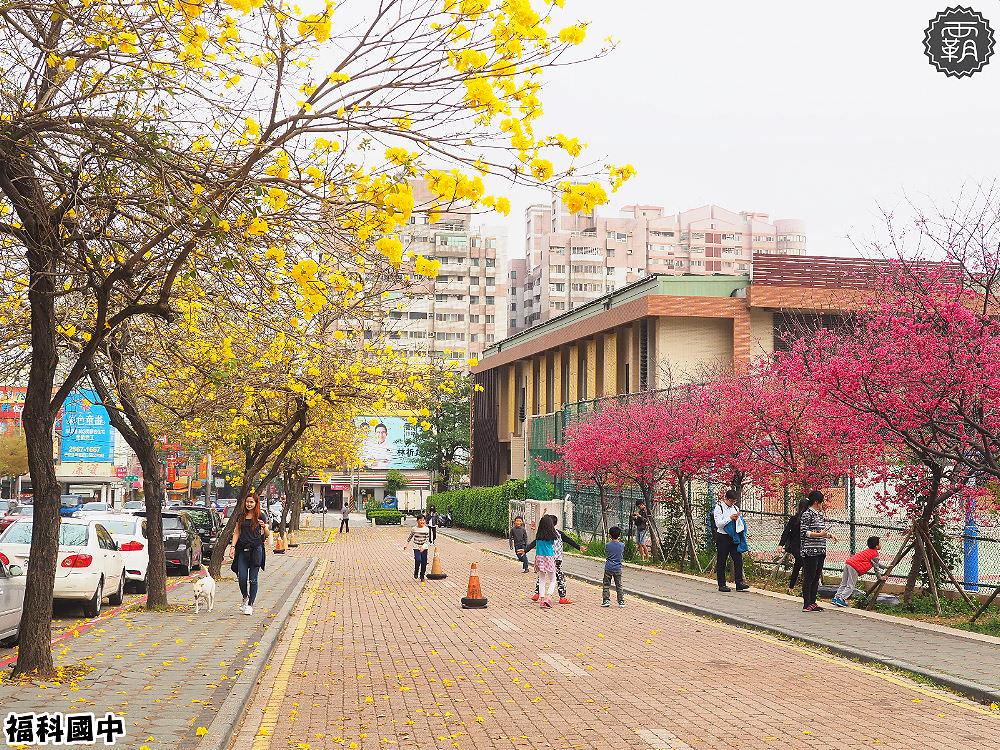 20180307230553 1 - 一次能捕捉到盛開的櫻花與黃花風鈴木耶~市區內賞花小確幸~