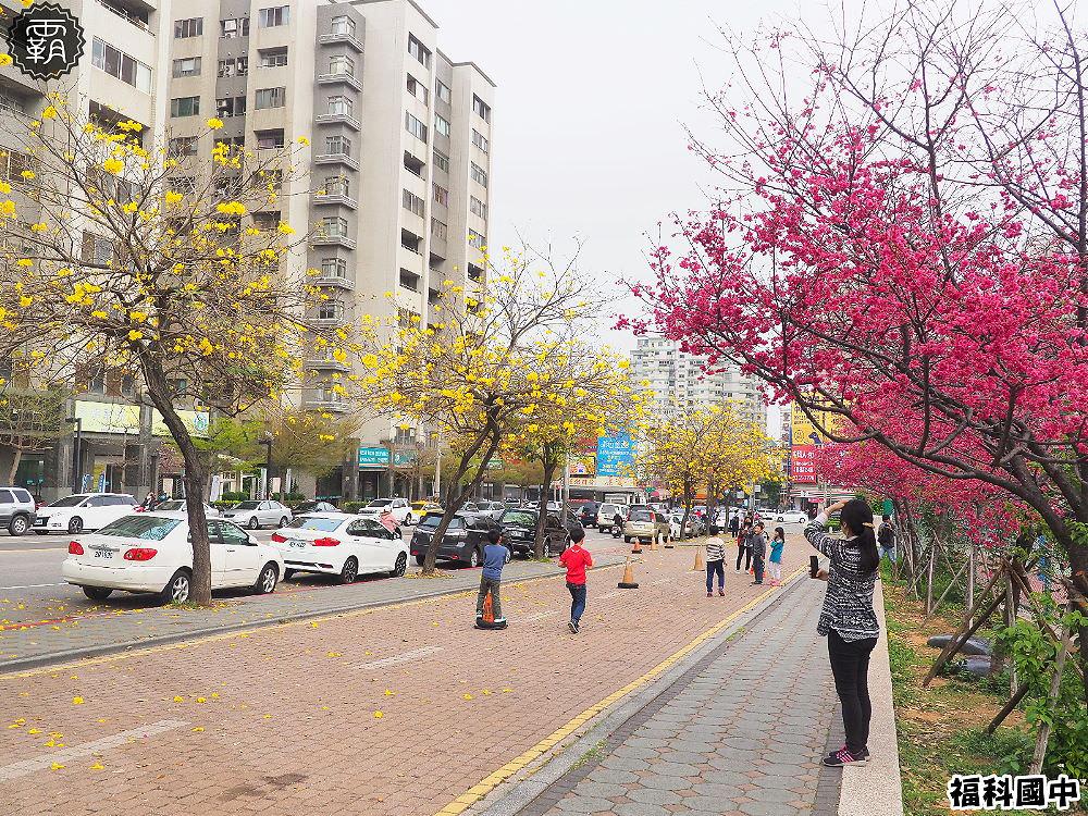 20180307230601 82 - 一次能捕捉到盛開的櫻花與黃花風鈴木耶~市區內賞花小確幸~