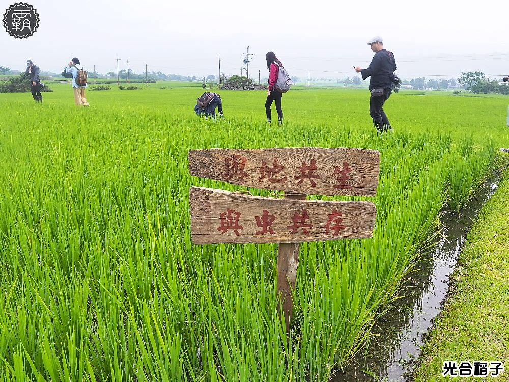 受保護的文章:<花蓮玉里> 光合稻子,聿犁聯邦農業與花蓮在地小農一同推廣優質玉里米,米飯的食味值一極棒!