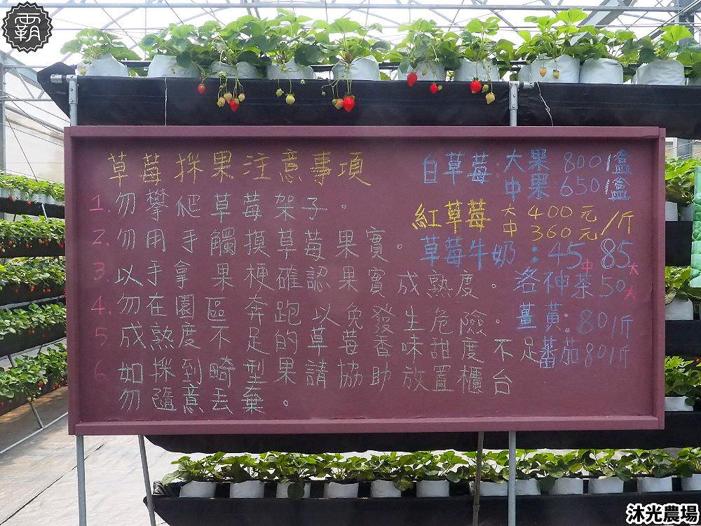 20190405214125 67 - 白草莓、水蜜桃草莓好特別!沐光農場,溫室高架草莓園,採草莓超舒適!