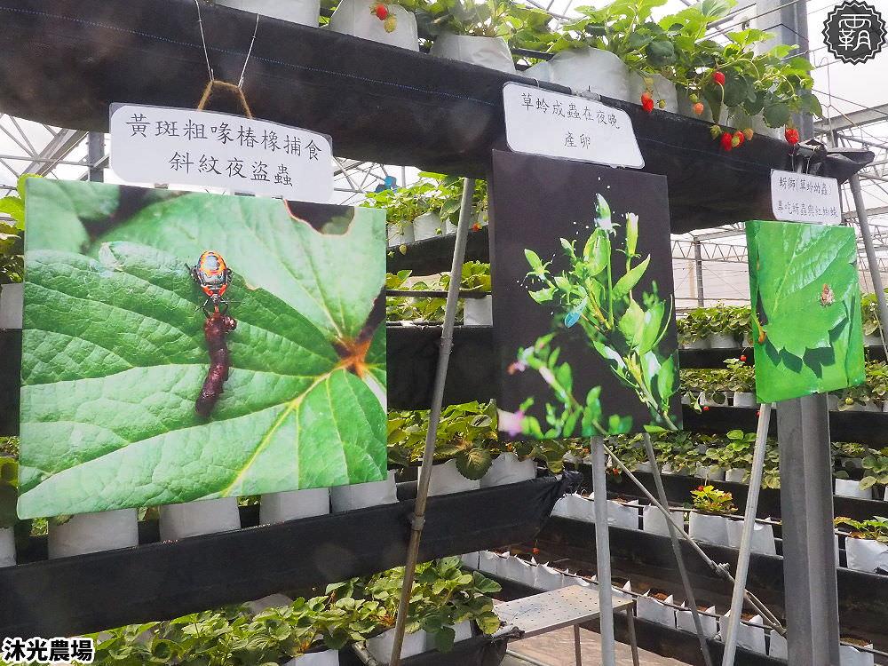 20190405214343 44 - 白草莓、水蜜桃草莓好特別!沐光農場,溫室高架草莓園,採草莓超舒適!
