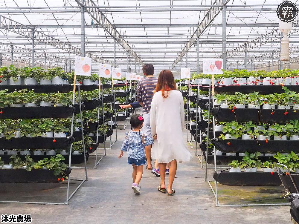 20190405214344 14 - 白草莓、水蜜桃草莓好特別!沐光農場,溫室高架草莓園,採草莓超舒適!
