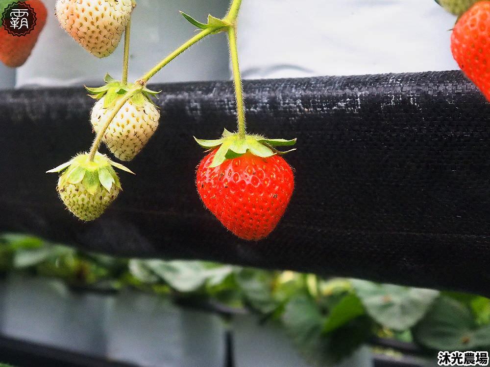20190405214538 30 - 白草莓、水蜜桃草莓好特別!沐光農場,溫室高架草莓園,採草莓超舒適!