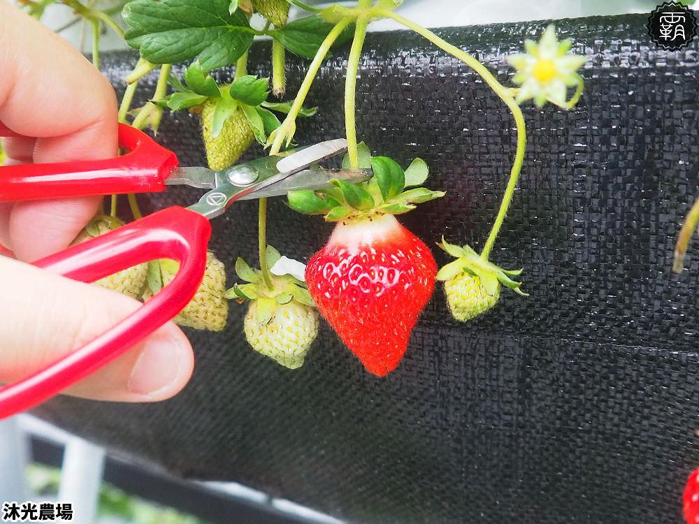 20190405214549 98 - 白草莓、水蜜桃草莓好特別!沐光農場,溫室高架草莓園,採草莓超舒適!