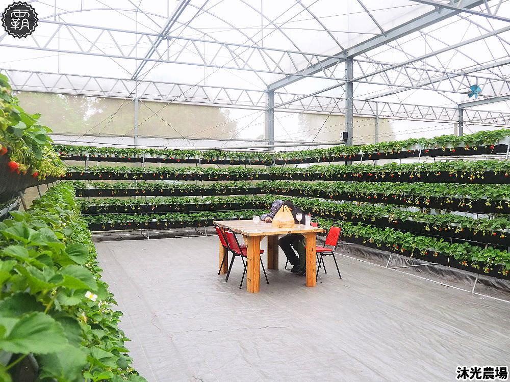 20190405214551 83 - 白草莓、水蜜桃草莓好特別!沐光農場,溫室高架草莓園,採草莓超舒適!
