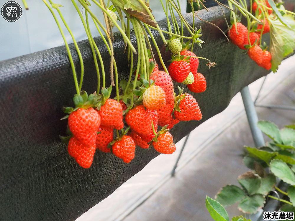 20190405214835 56 - 白草莓、水蜜桃草莓好特別!沐光農場,溫室高架草莓園,採草莓超舒適!