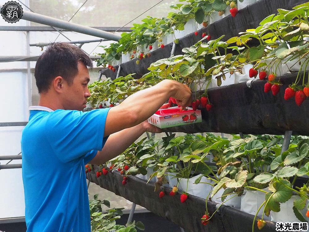 20190405215338 100 - 白草莓、水蜜桃草莓好特別!沐光農場,溫室高架草莓園,採草莓超舒適!