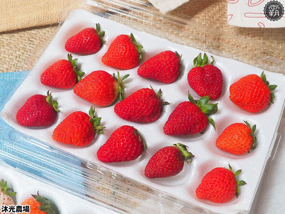 20190405215341 53 - 白草莓、水蜜桃草莓好特別!沐光農場,溫室高架草莓園,採草莓超舒適!