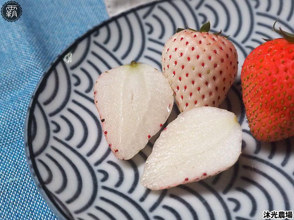 20190405215348 53 - 白草莓、水蜜桃草莓好特別!沐光農場,溫室高架草莓園,採草莓超舒適!