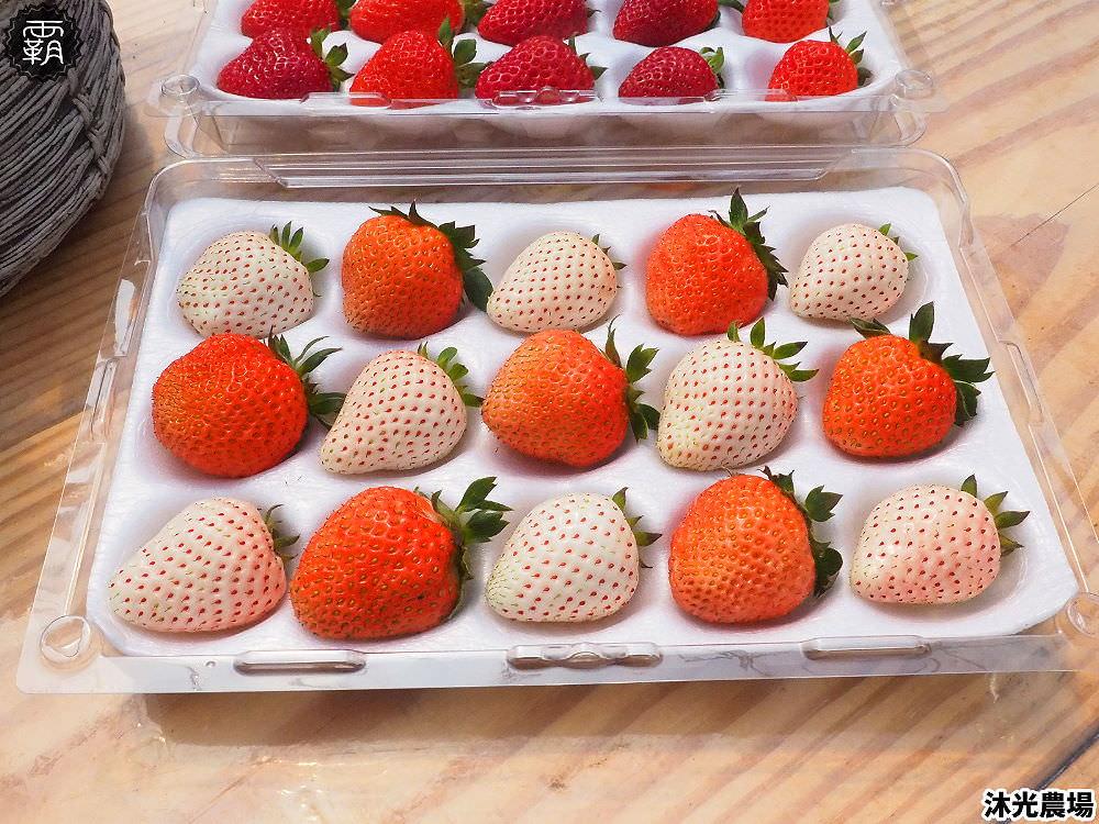 20190405220440 83 - 白草莓、水蜜桃草莓好特別!沐光農場,溫室高架草莓園,採草莓超舒適!