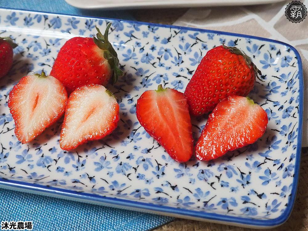 20190405220759 17 - 白草莓、水蜜桃草莓好特別!沐光農場,溫室高架草莓園,採草莓超舒適!